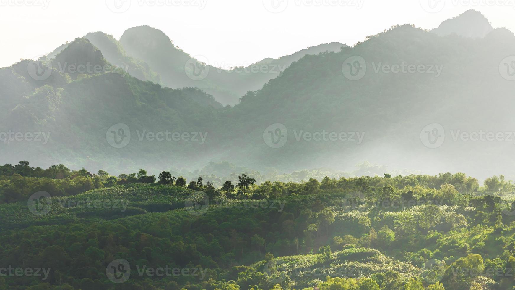 mistige berg bos vallei foto