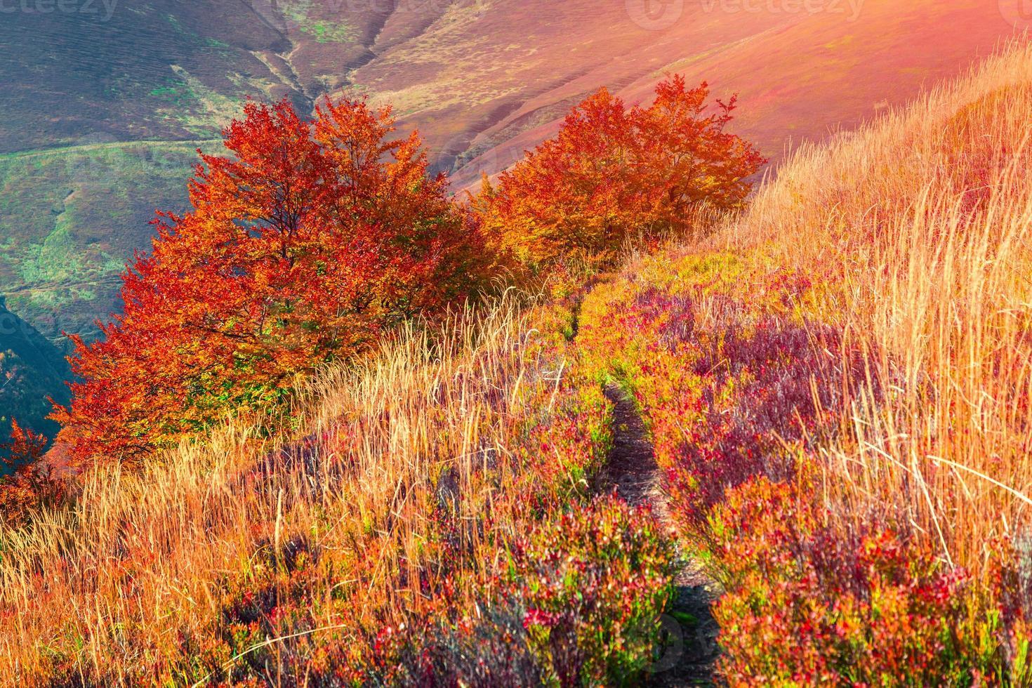 kleurrijke herfst zonsopgang in het bergbos. foto