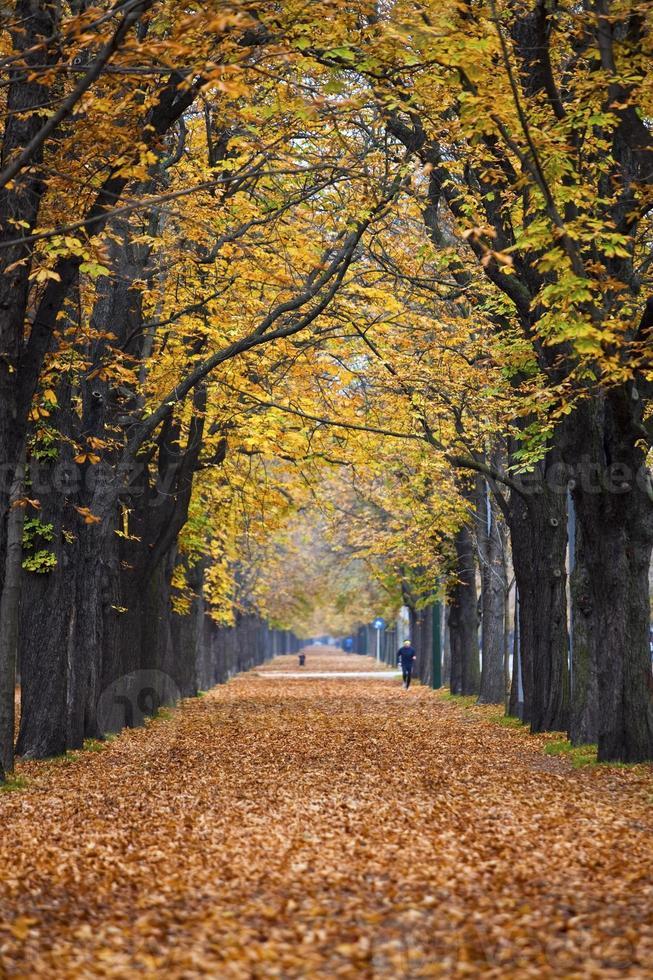 herfst bospad / steegje met jogger foto