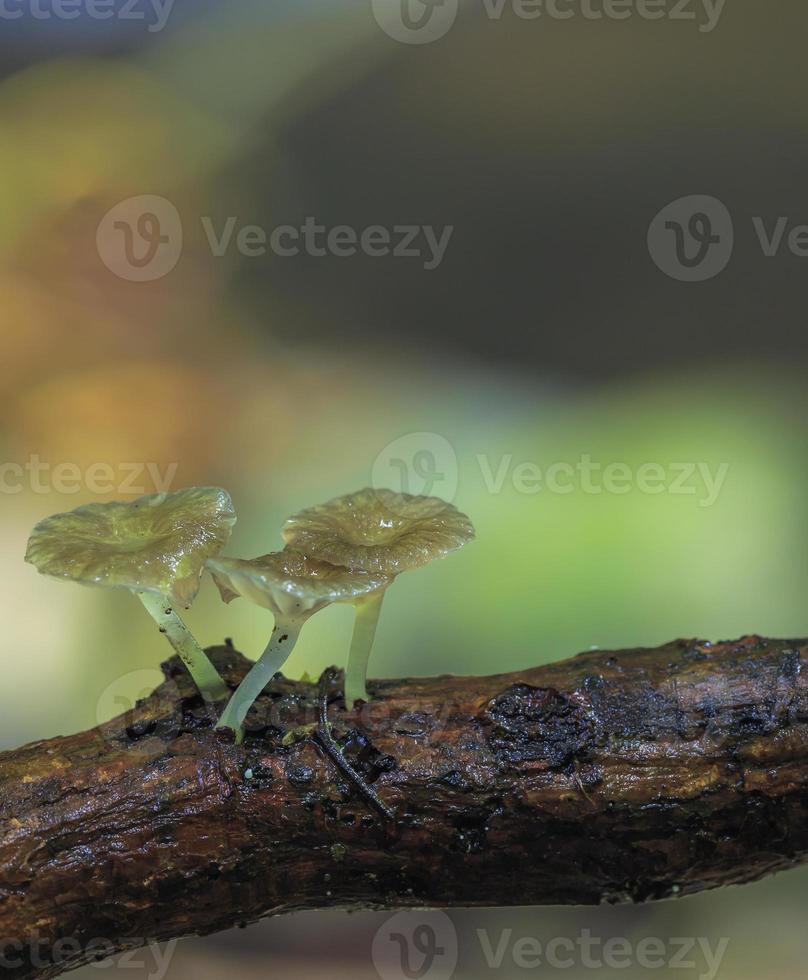 wilde paddestoelen groeien op een boslogboek foto