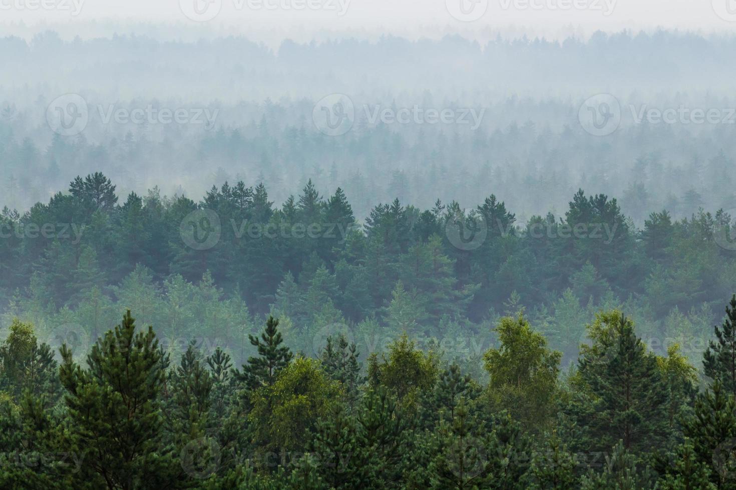 mist over het bos foto