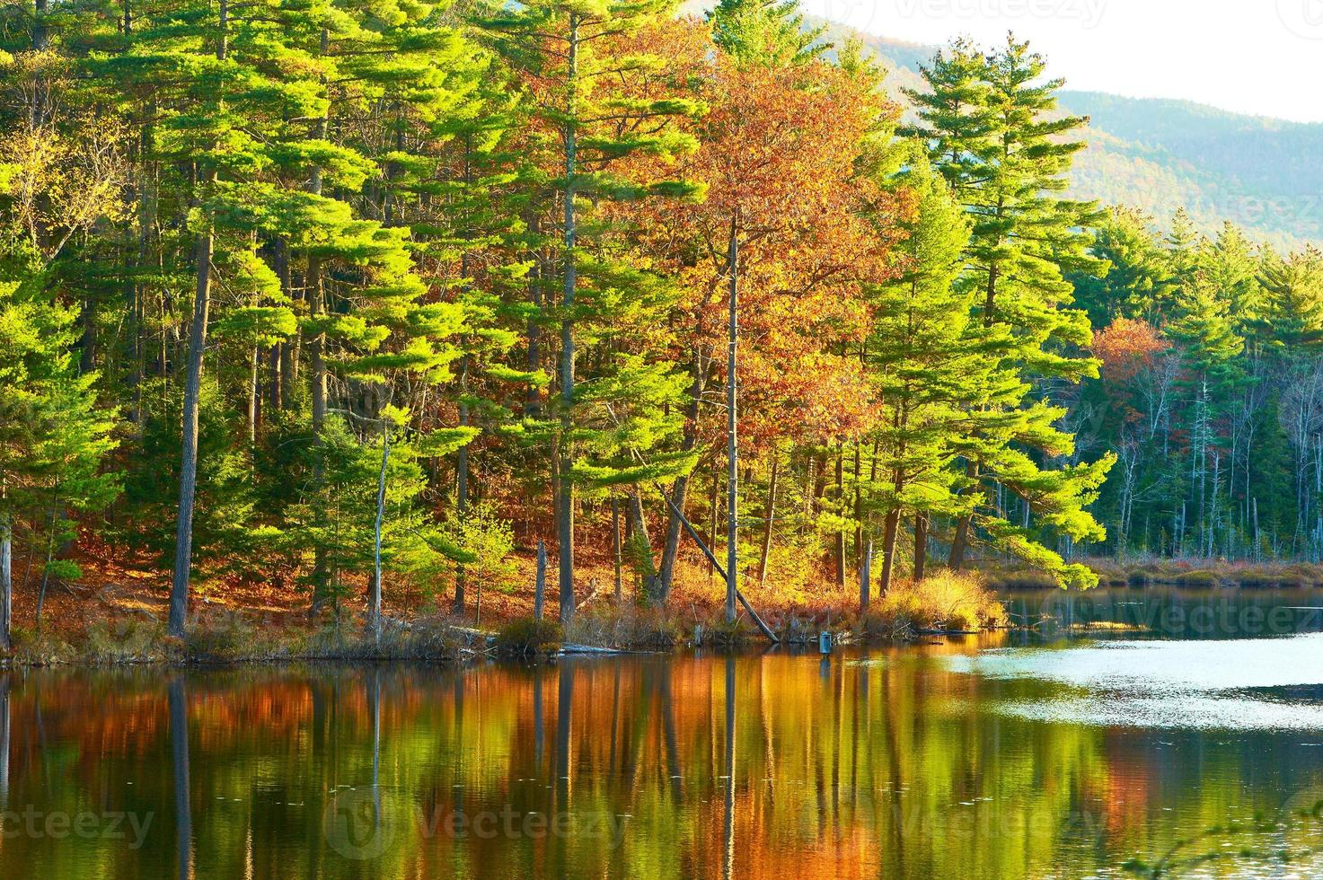 vijver in White Mountain National Forest, New Hampshire foto