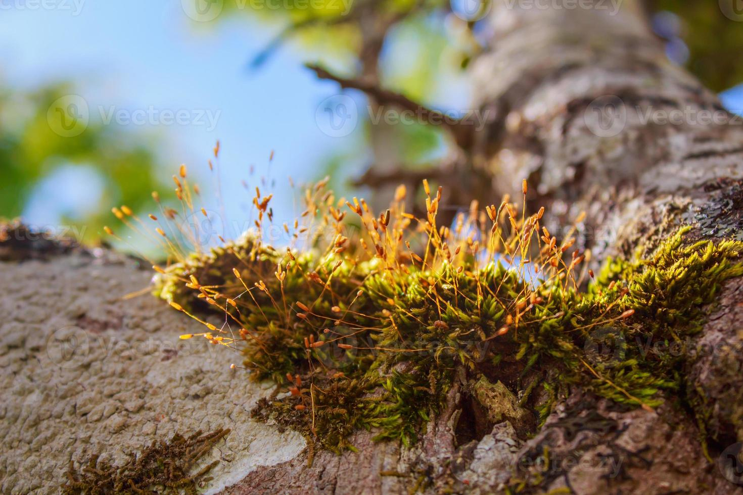 varenplant groeit op oude boomstronk in de tuin. foto