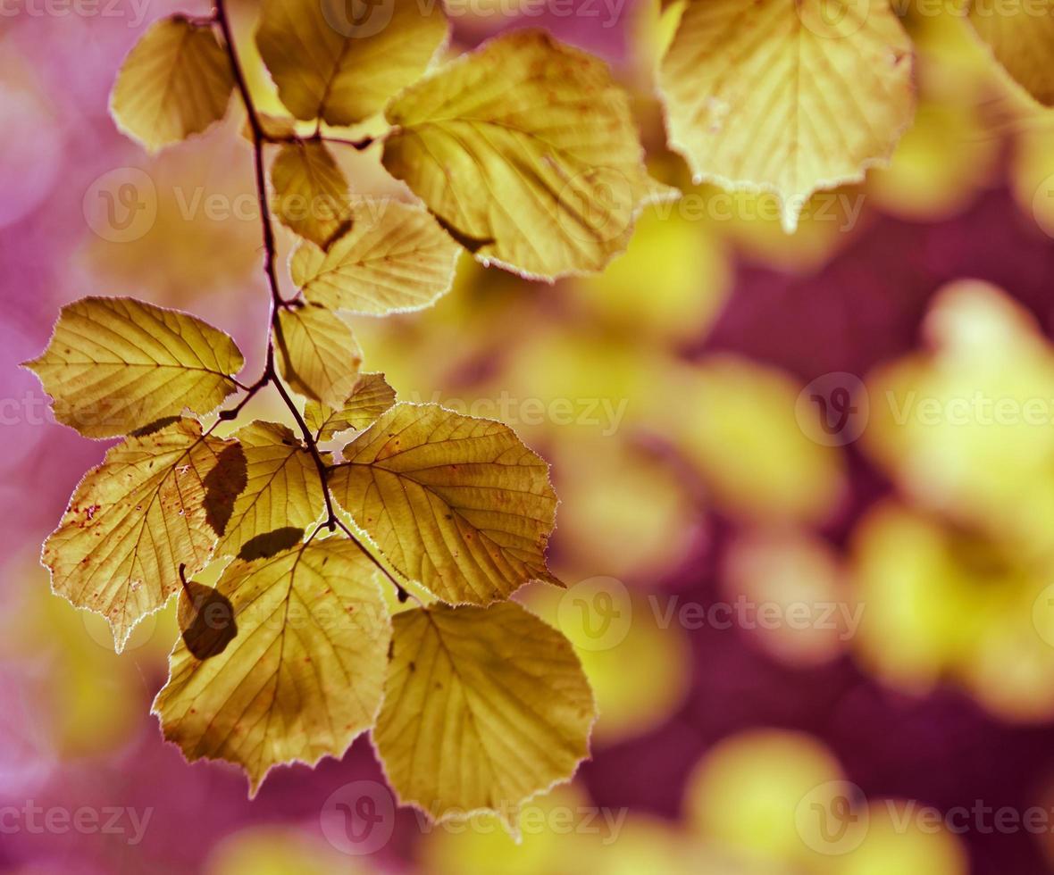herfst gebladerte foto