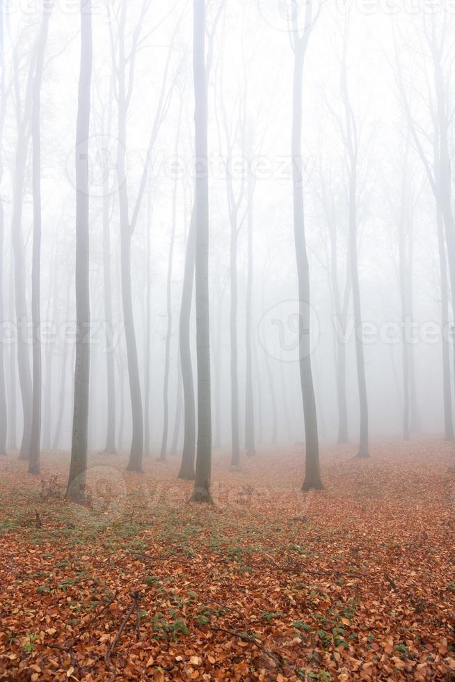 herfst mist foto