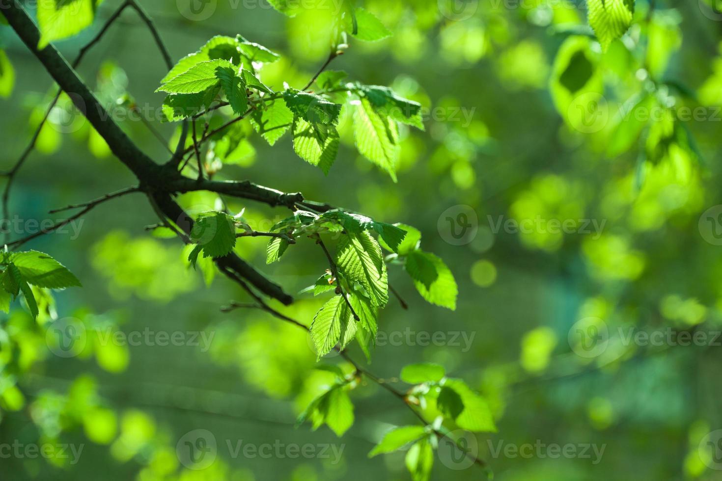 gebladerte groene achtergrond foto