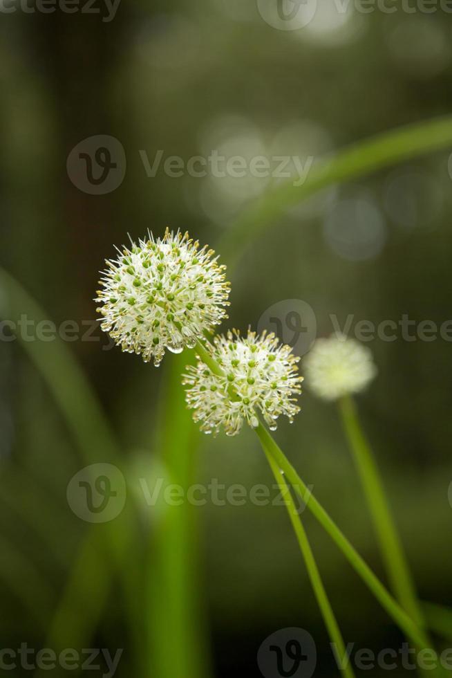 mooie bloemen. foto