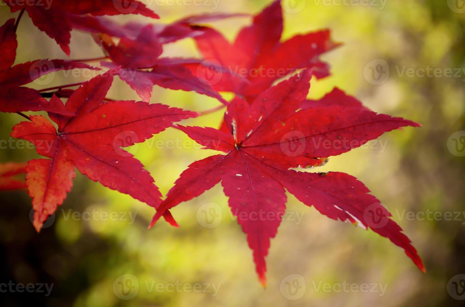 abstracte herfstachtergronden voor uw ontwerp foto