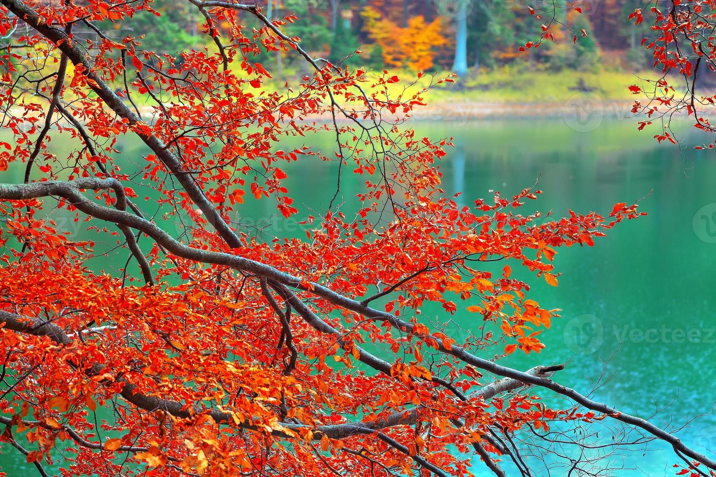 kleur takken van bomen in de herfst foto