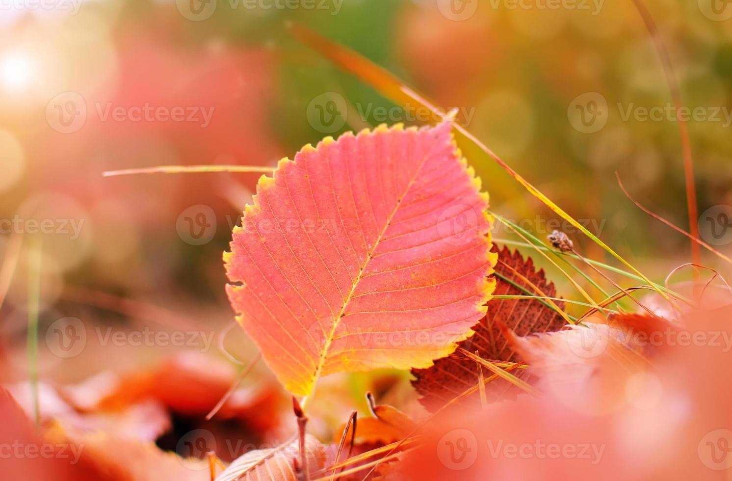 kleurrijke herfst foto