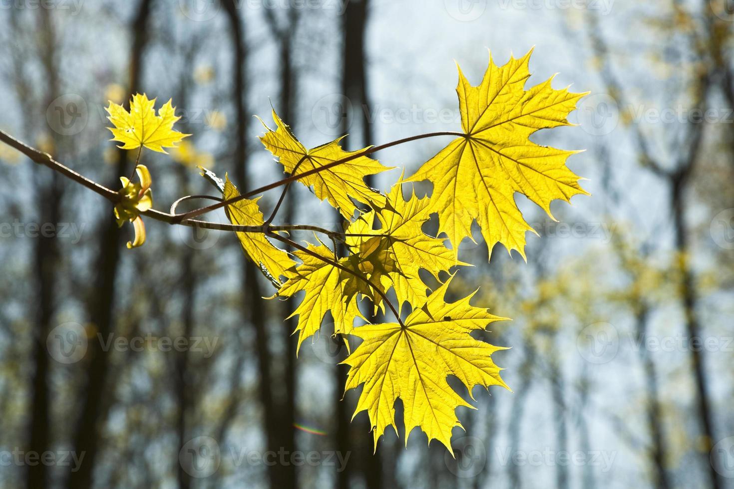 bladeren bij een tak van de boom foto