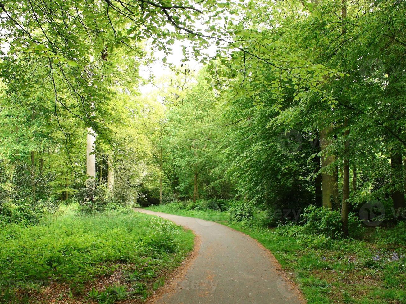 kijken naar landelijke voetgangerspad weg in de zomer foto