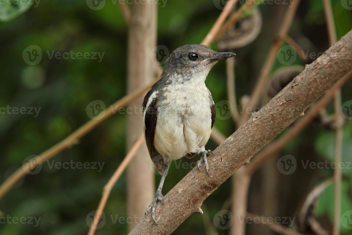 vogel op de boom foto