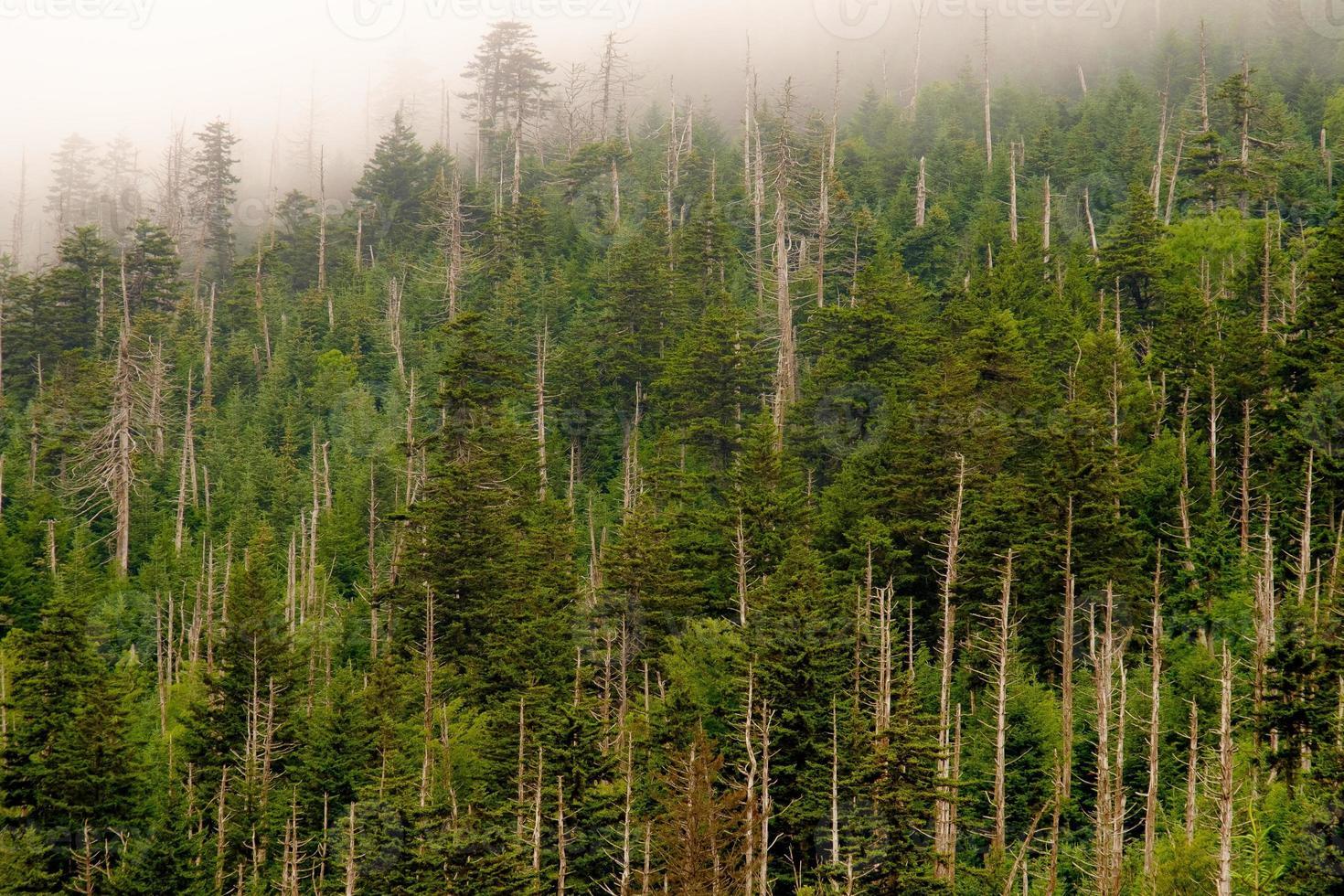 berghelling in wolken foto