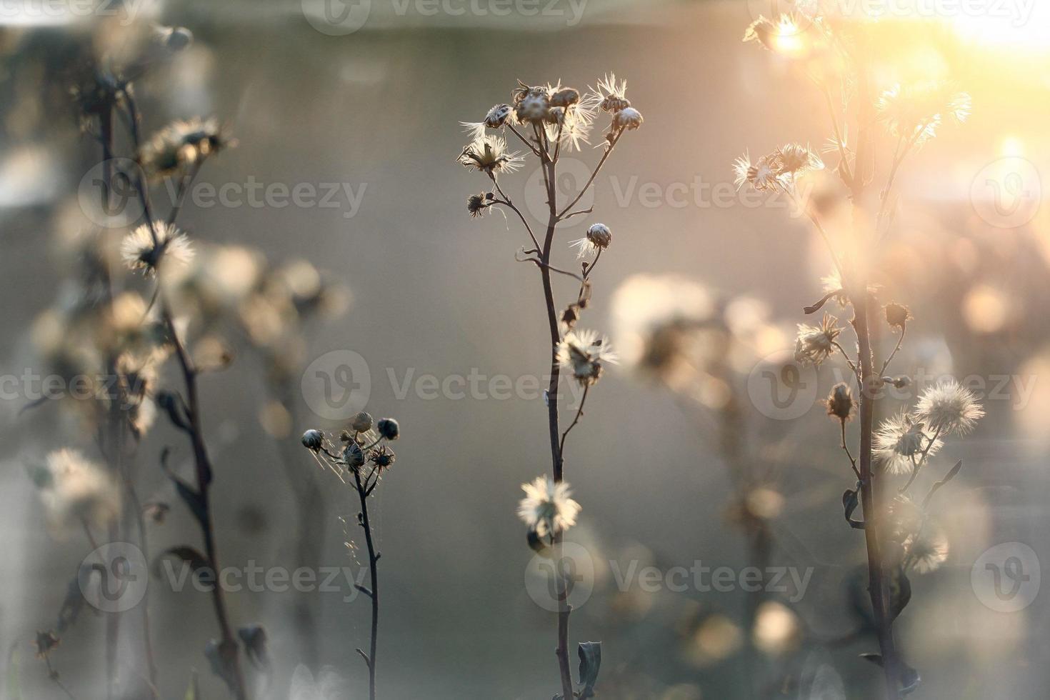 herfst takken en gras bij zonsondergang foto