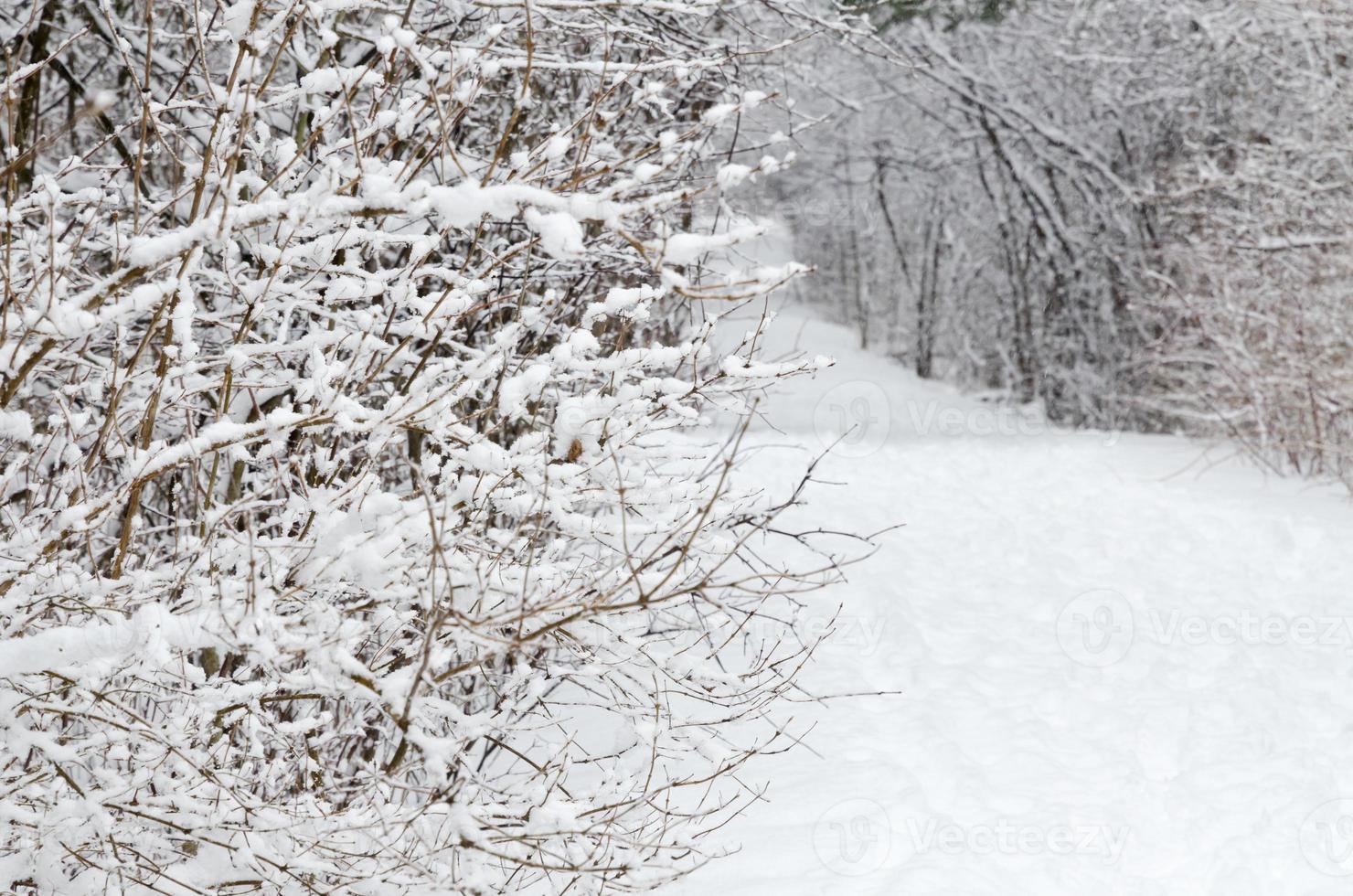 bomen vallende sneeuw foto