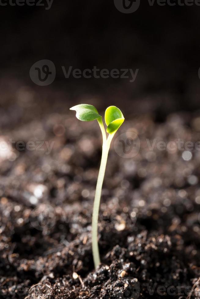 groene zaailing die concept van nieuw leven illustreert foto