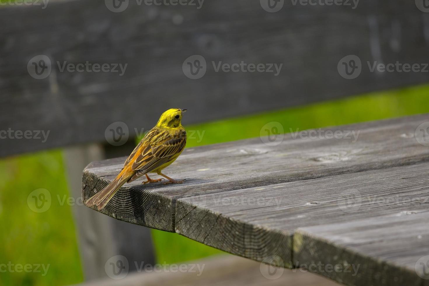kleine vogel foto