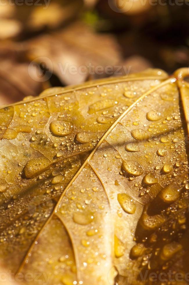 herfstbladeren in de bomen foto