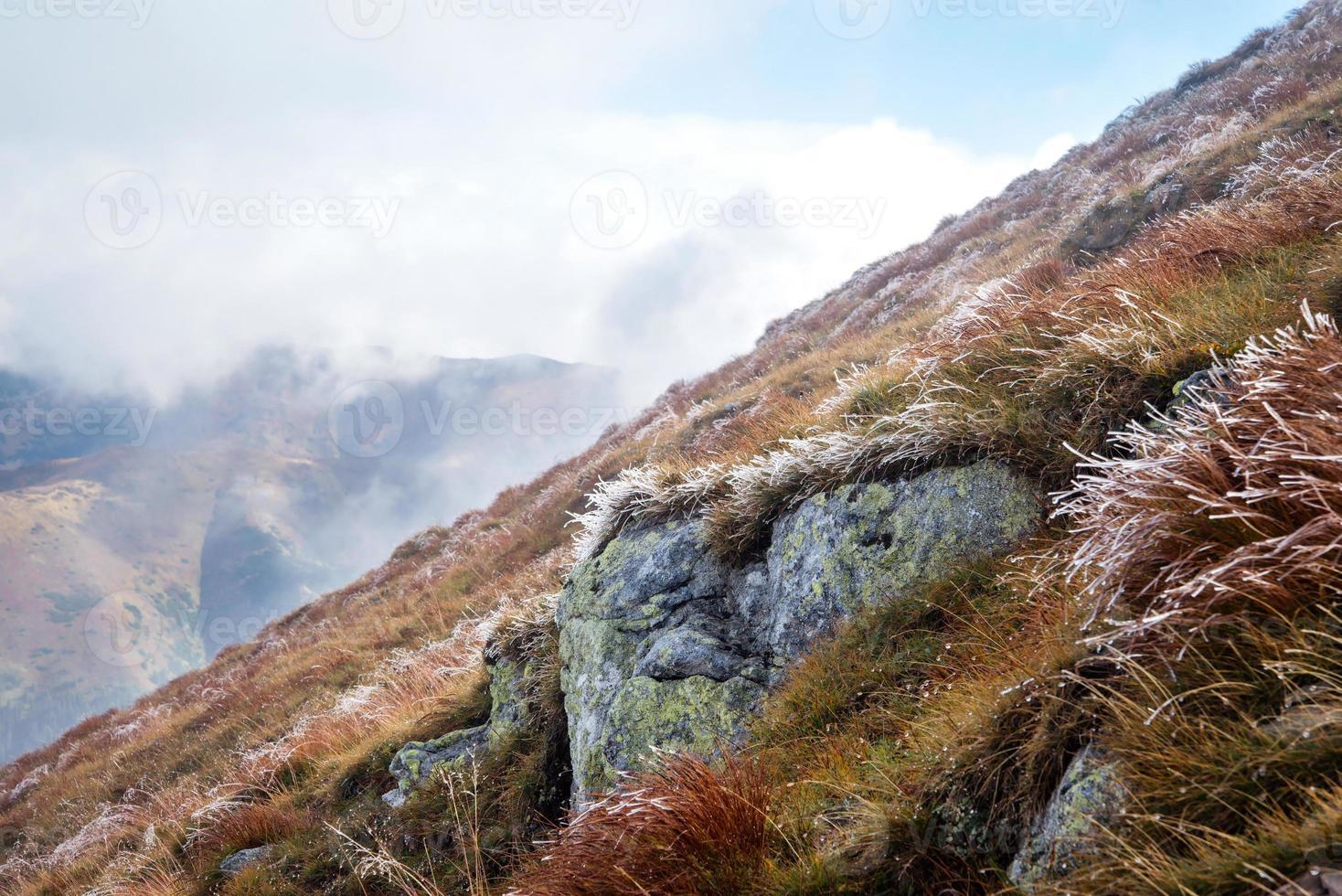 vorst bij de volovec-bergtop, tatra foto