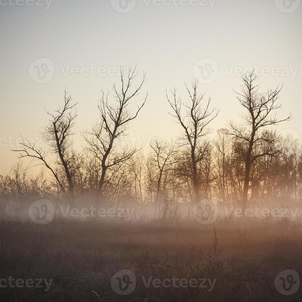 ochtend licht foto