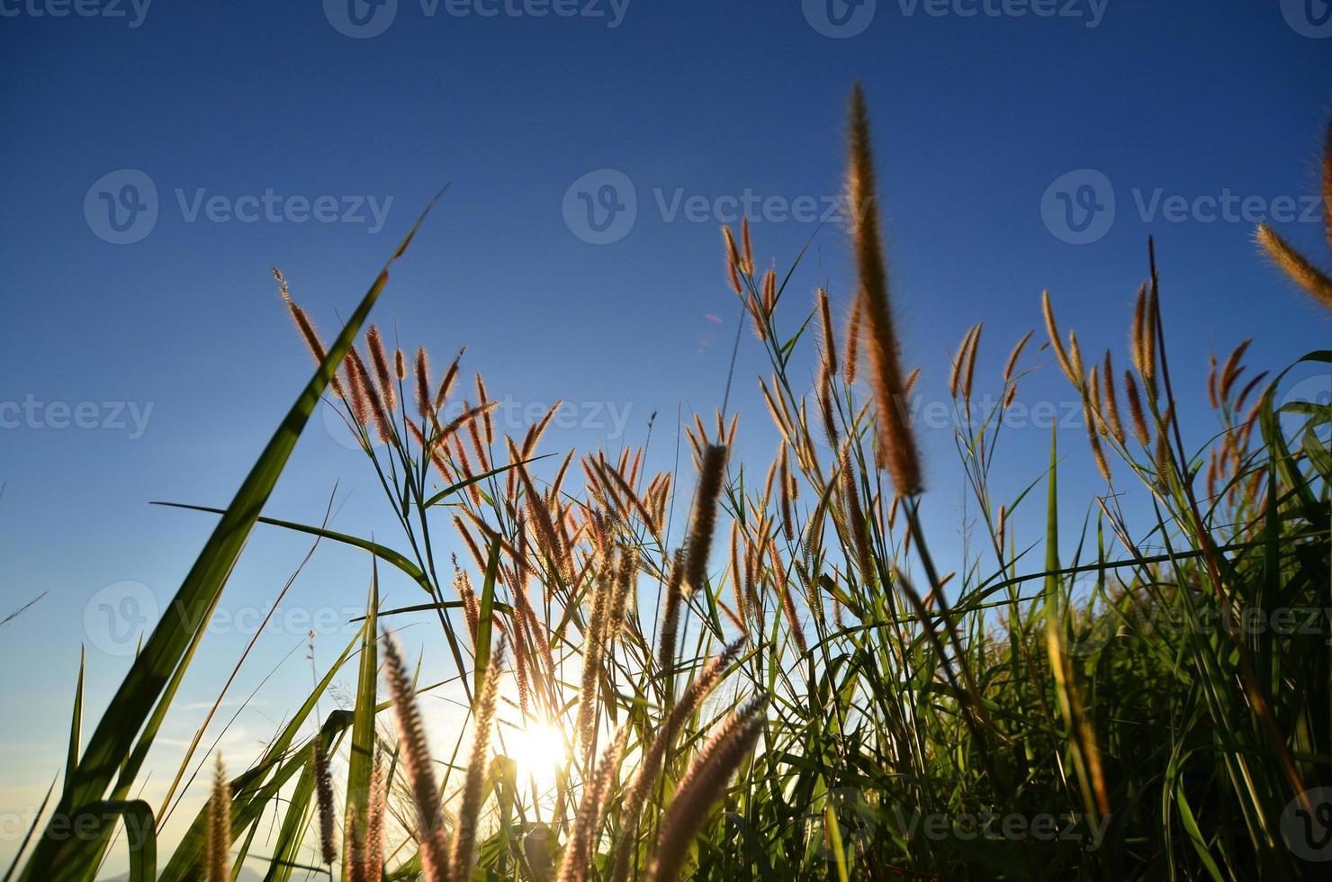 grasvelden op de berg foto