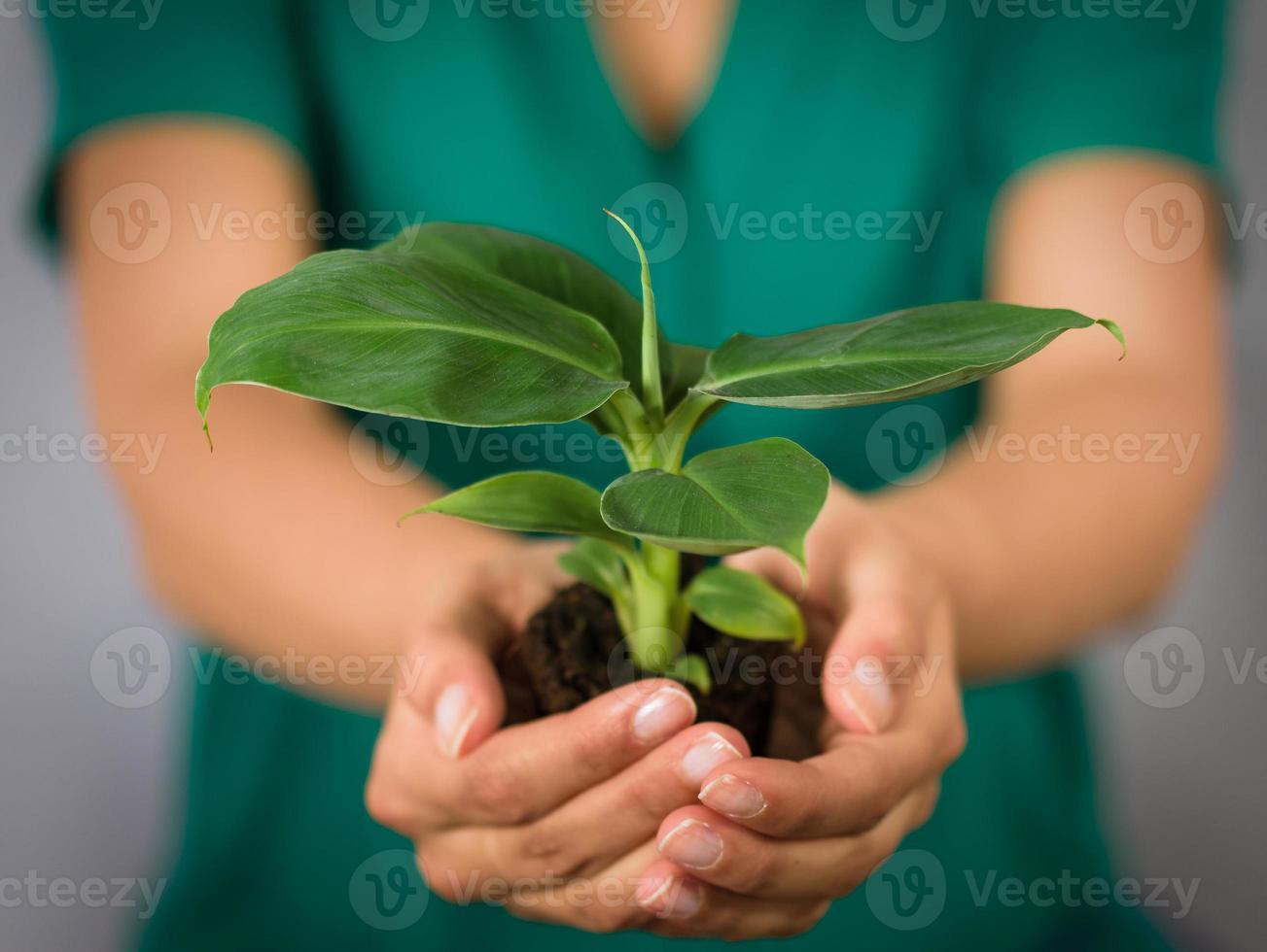 plant in haar handen foto