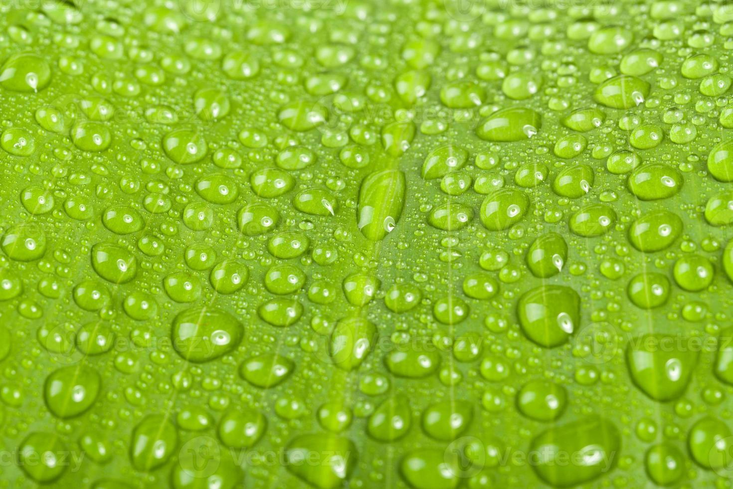 waterdruppels op groen plantblad foto