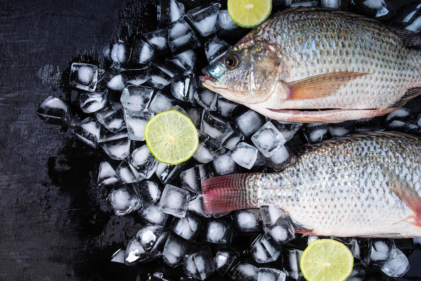 verse tilapia vissen op ijs met citroenen foto