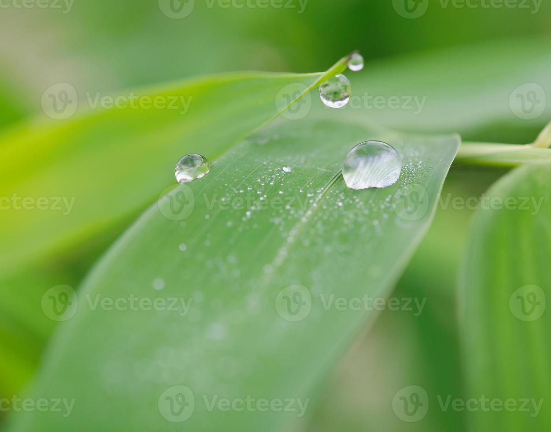 plant blad met waterdruppels foto