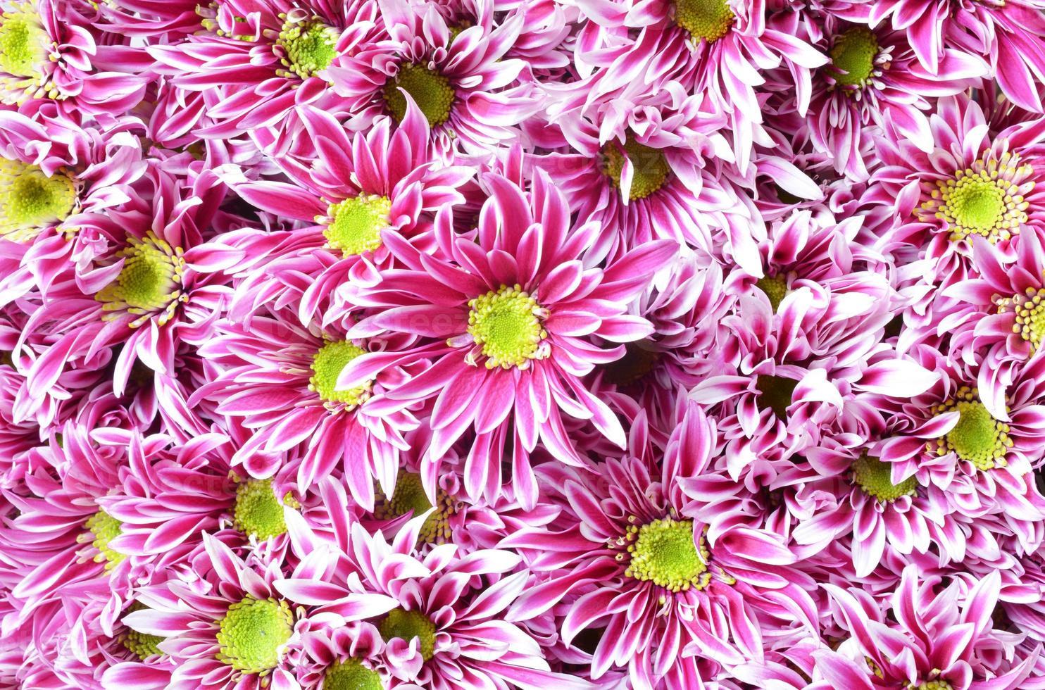 roze bloem met lange dunne bloembladen en een geel hart. foto