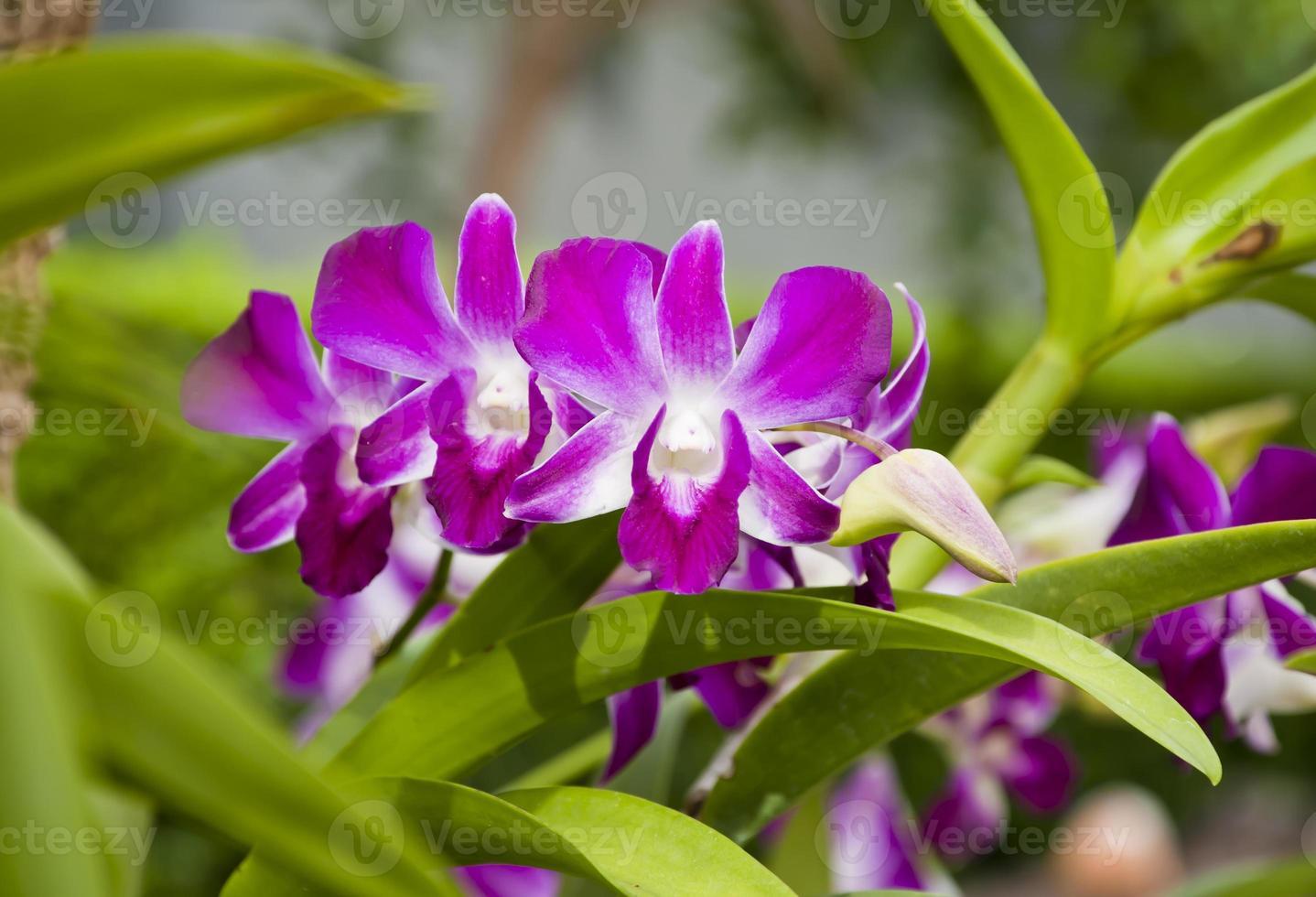 orchidee op boom achtergrond foto
