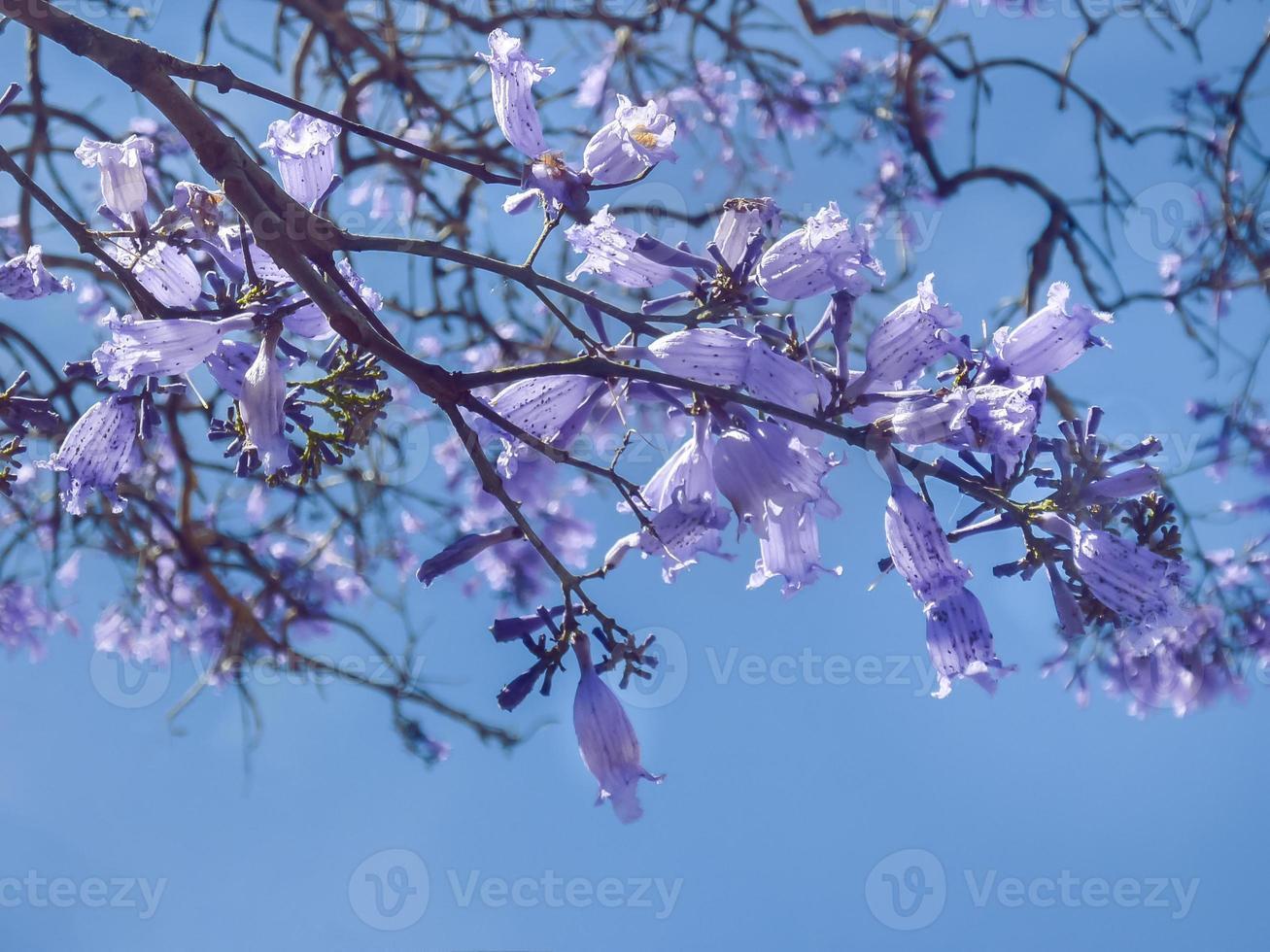 violette bloemen tegen blauwe hemel foto