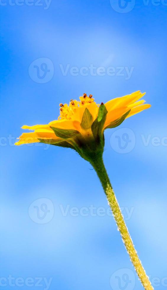 gele bloemen tegen blauwe hemel foto