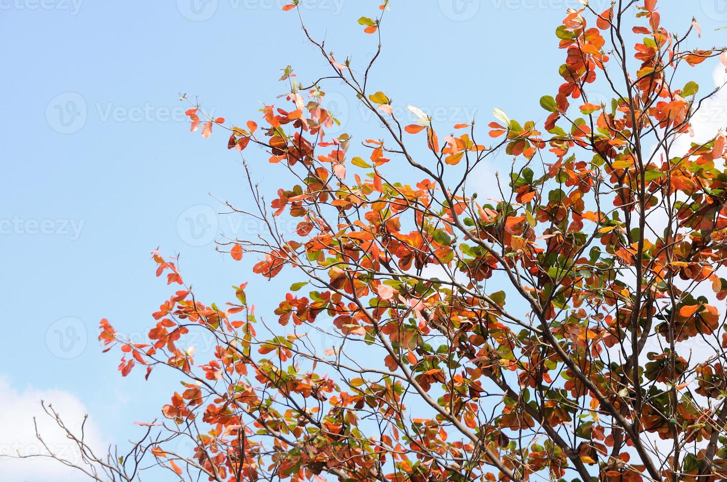 rode kleur bladeren met blauwe lucht foto