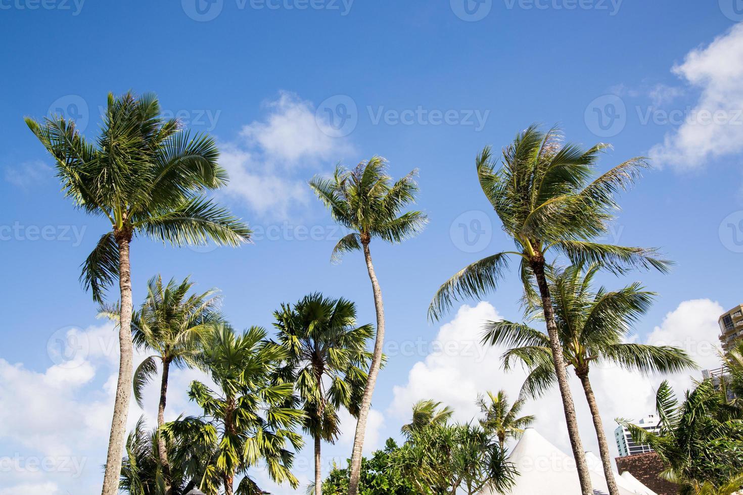 palmbomen op de achtergrond van de blauwe hemel foto