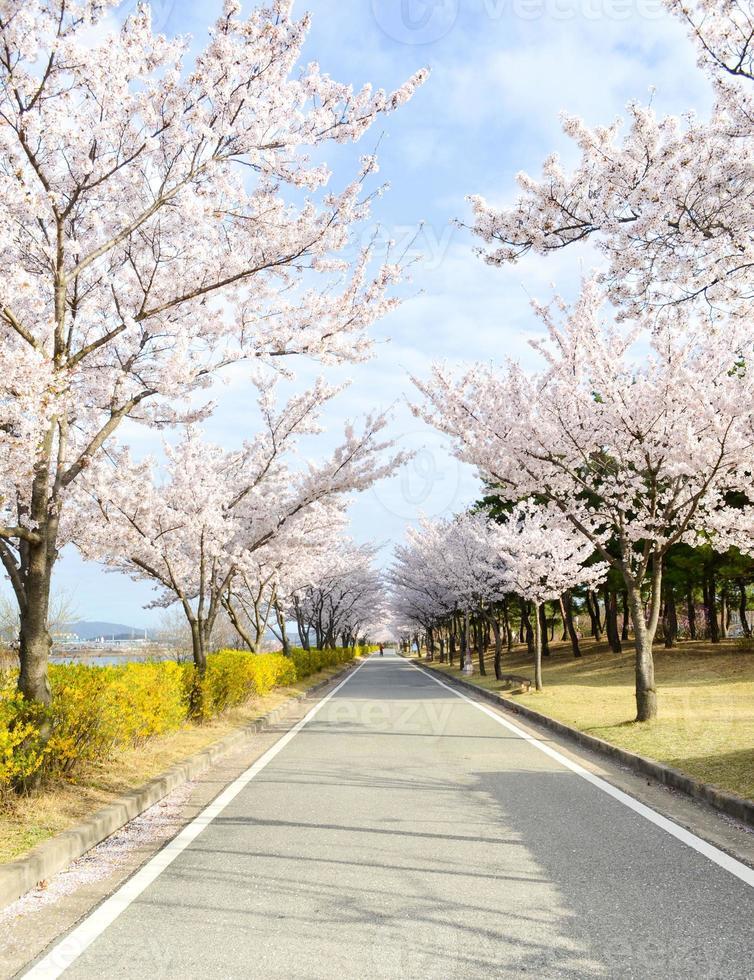 roze kersenboom bloesem en heldere blauwe hemel foto