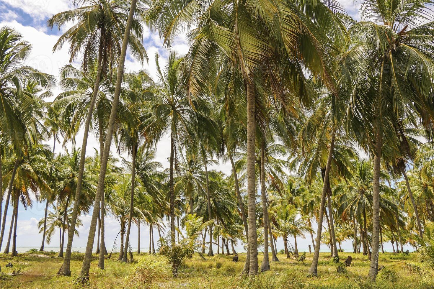 palmbomen dromen foto