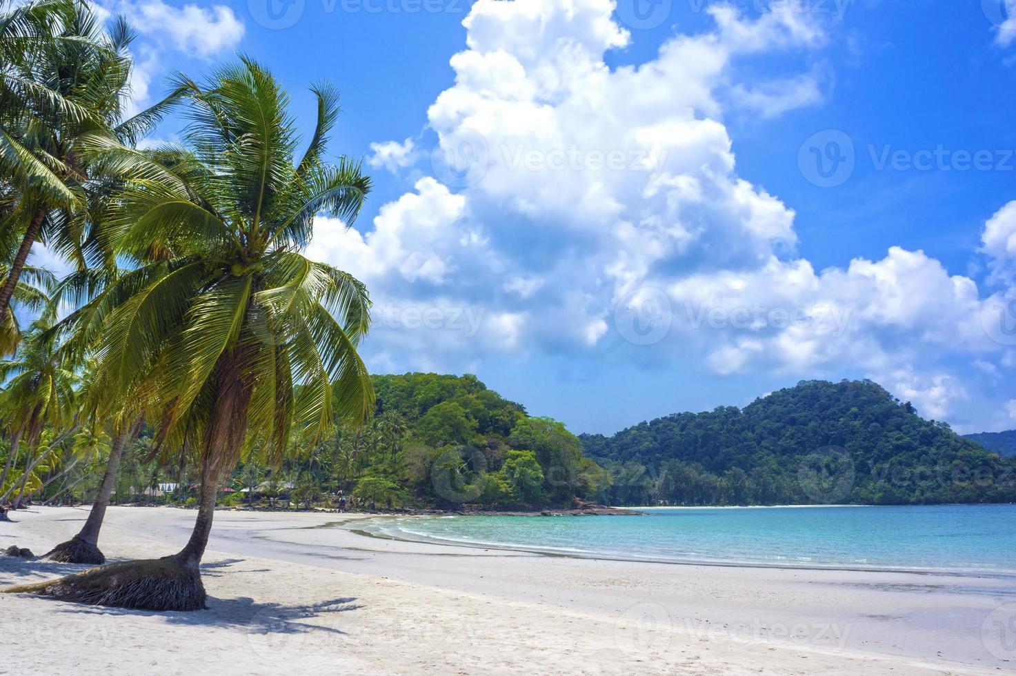 tropisch resort met een groene lagune en palmboom foto