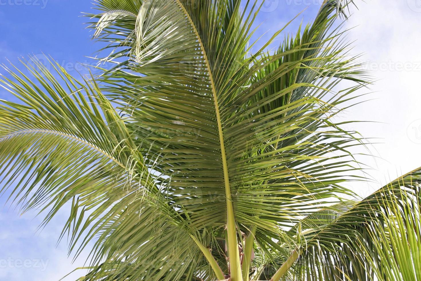 Palmbladeren foto