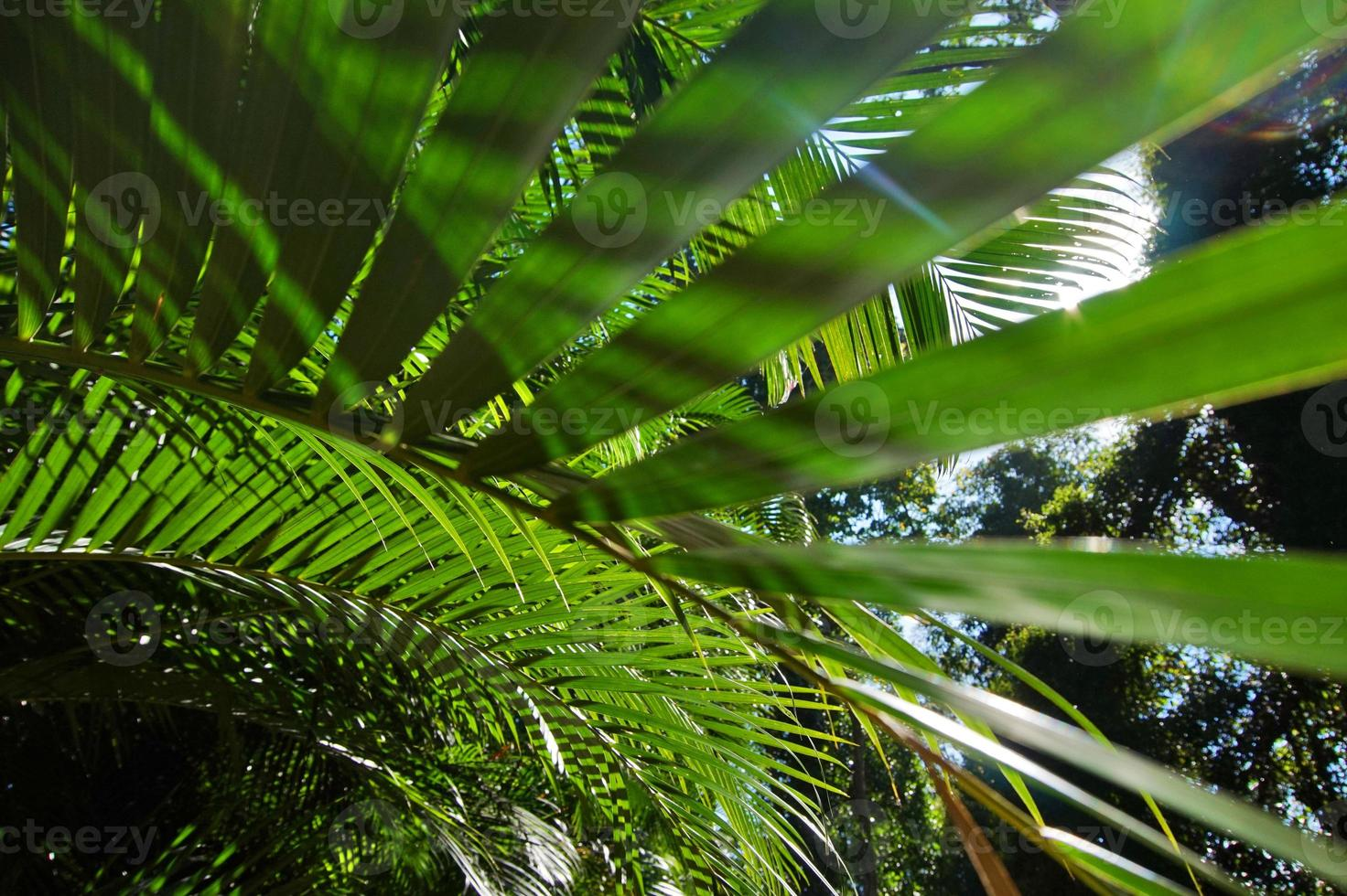 Sri Lanka, Kandy, de bladeren van palmbomen foto