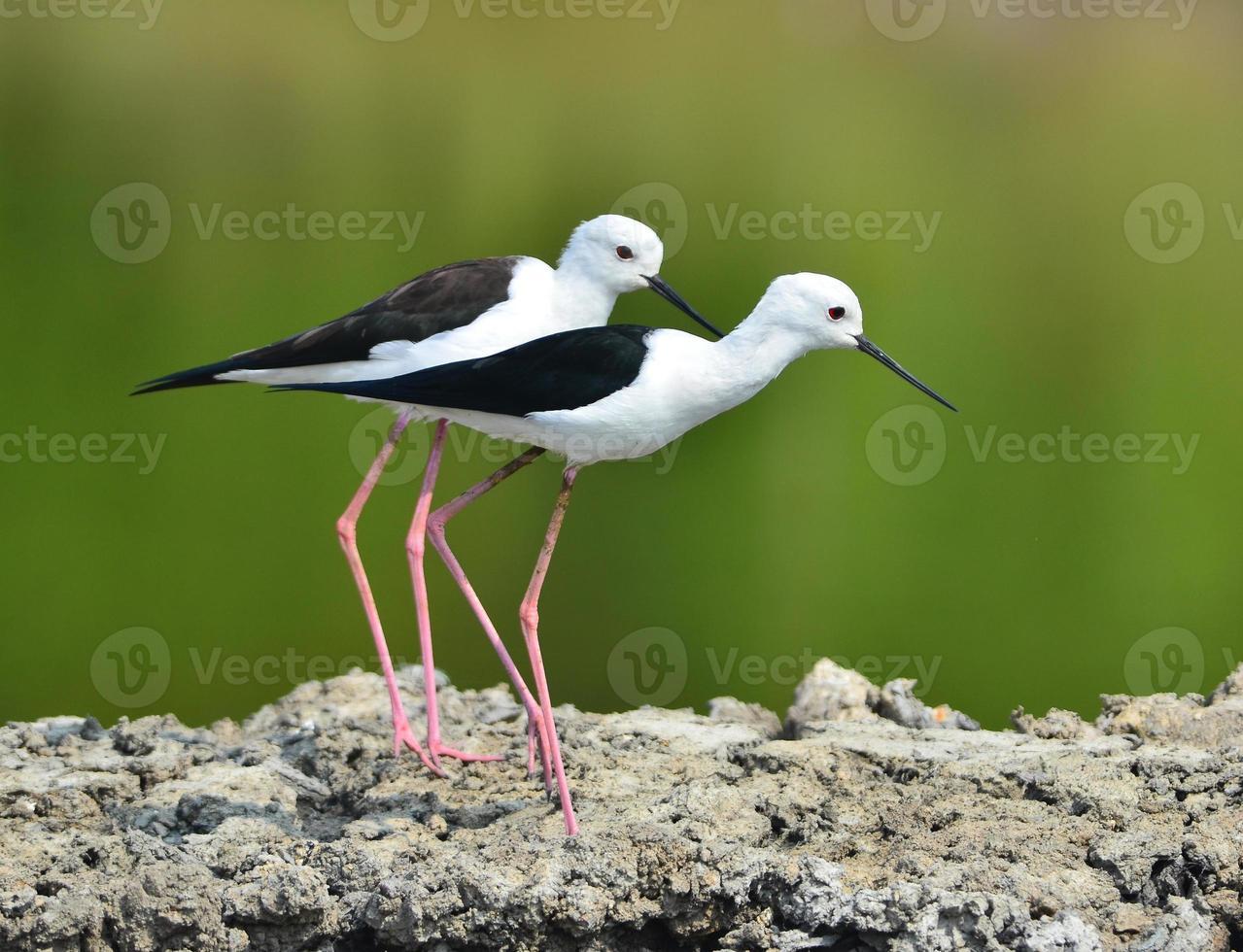 watervogel foto