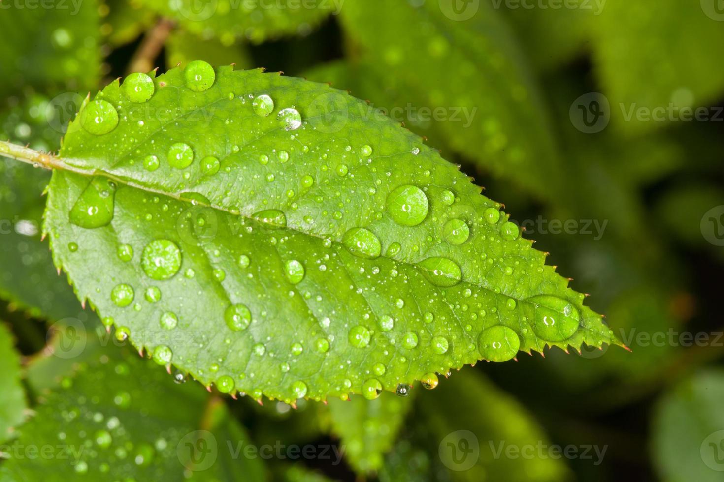 waterdruppels foto