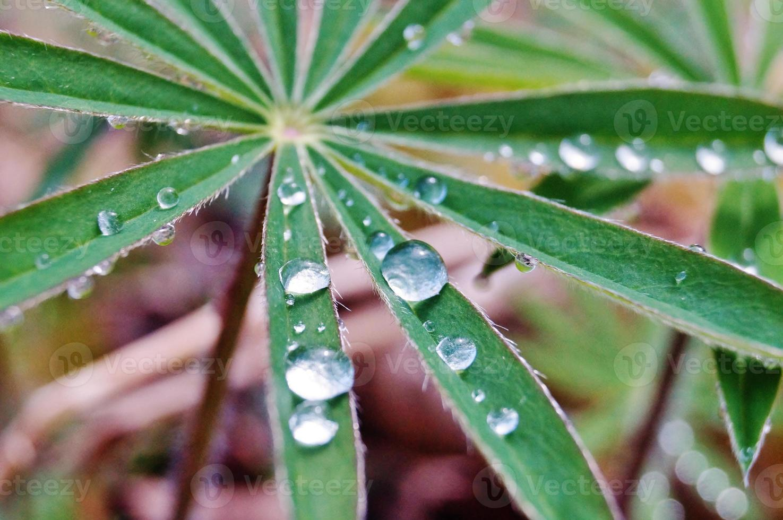 waterdruppel foto