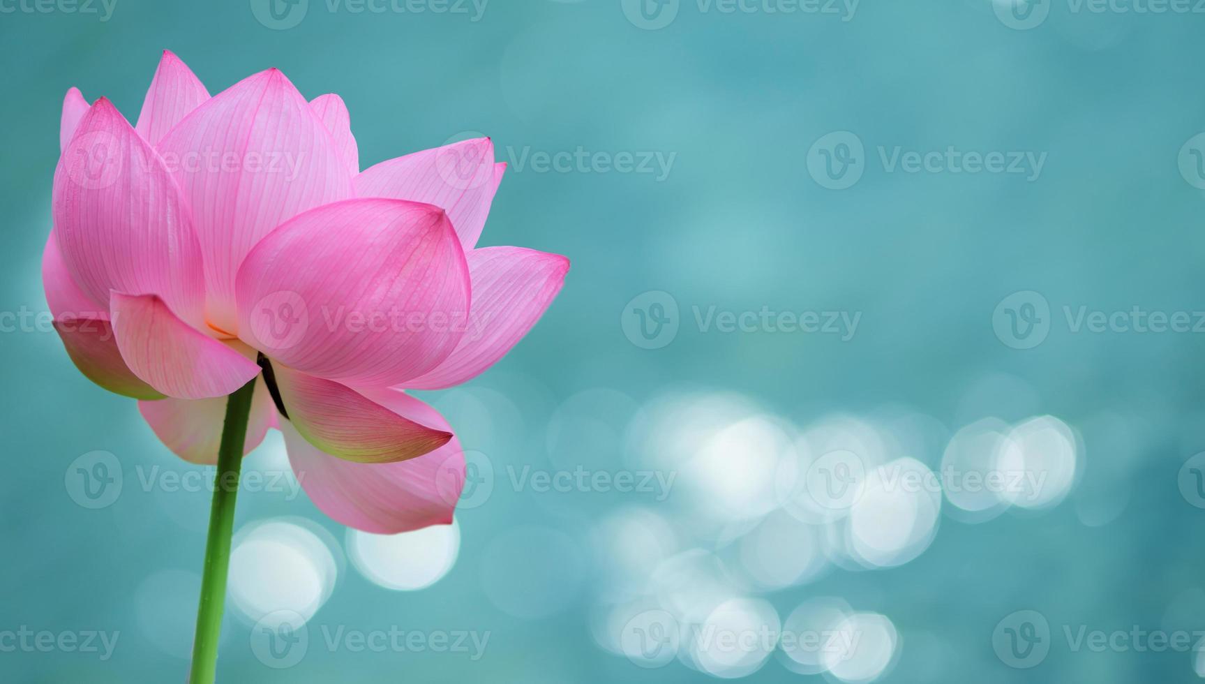 waterlelie bloem panoramisch beeld foto