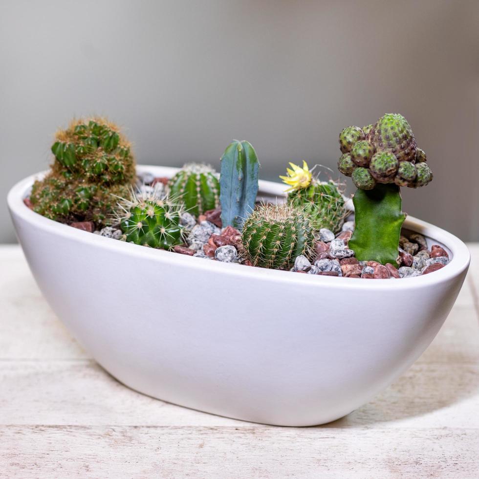 prachtig terrarium met vetplanten foto