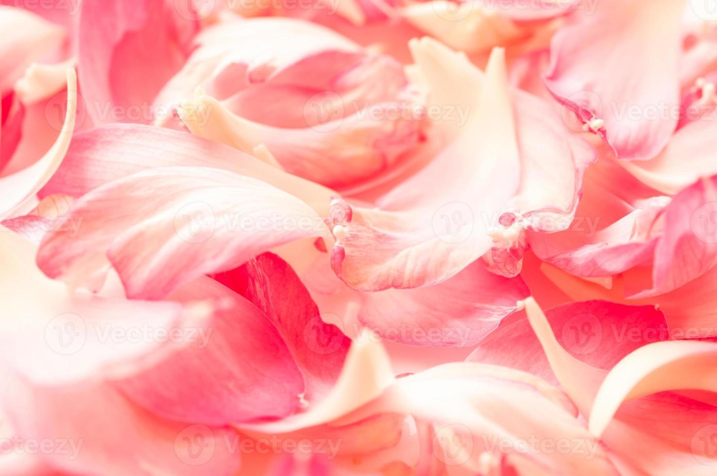 lotusbloemblaadjes op witte achtergrond met ruimte voor uw tekst foto