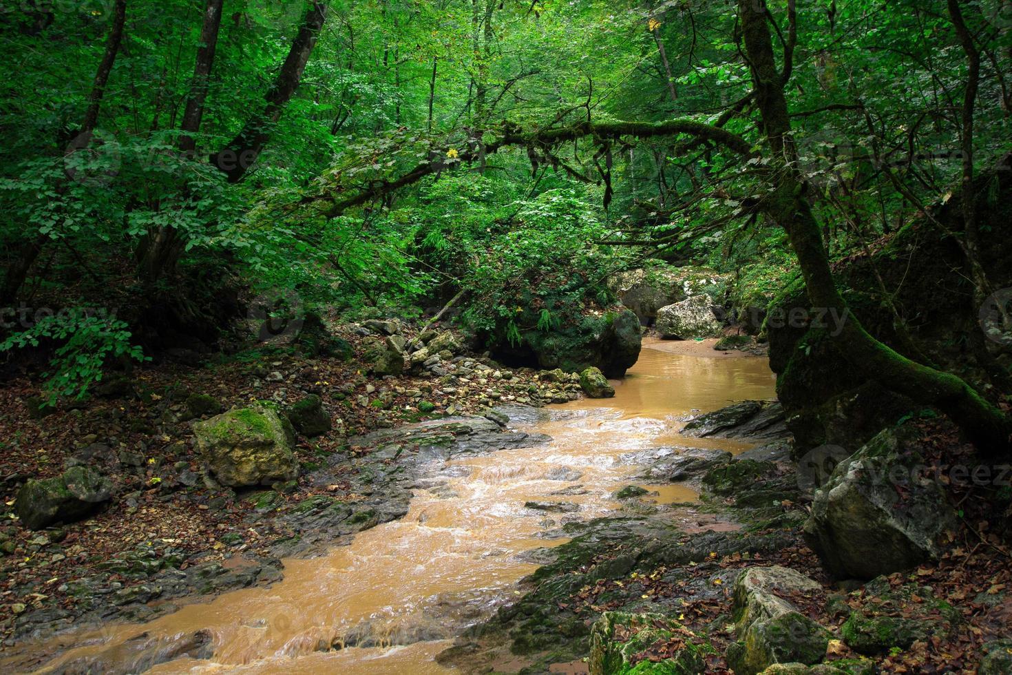 de bergrivier in de bossen nabij de noordelijke Kaukasus foto