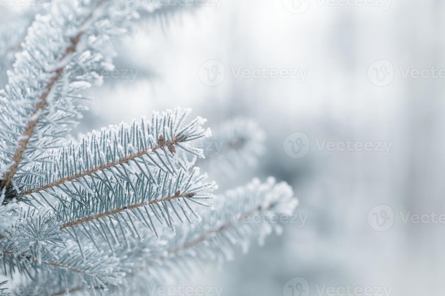 winter achtergrond met ijzige dennentakken foto