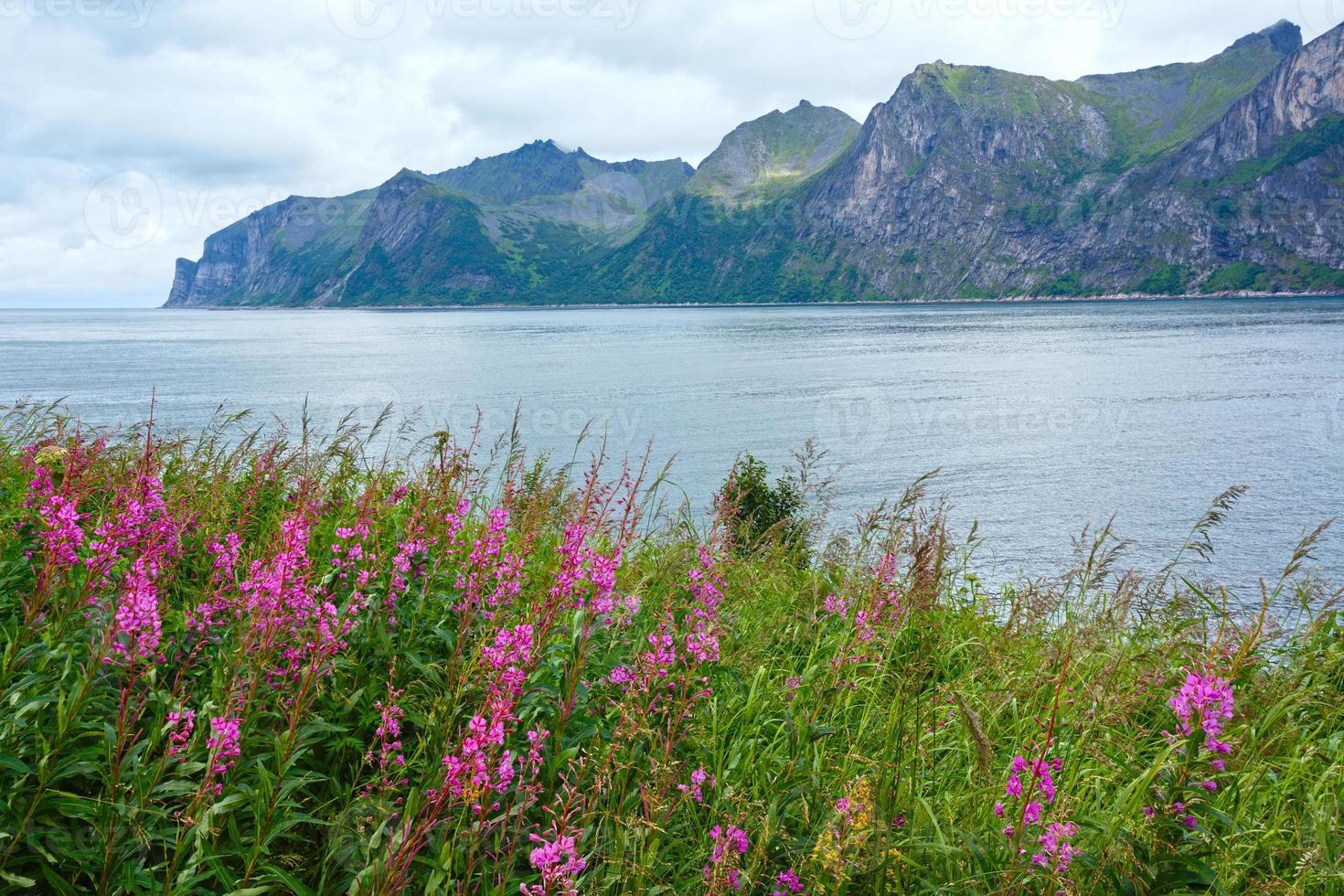 zomer senja kust (noorwegen) foto